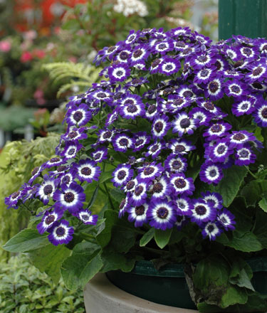 Twigland where service is paramount flowering shrubs and perennials bedding plants and potted colour pots and bowls or colourful and striking foliage whatever you can enjoy a colourful mightylinksfo